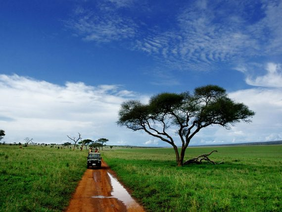 How To Own A Safari For Free